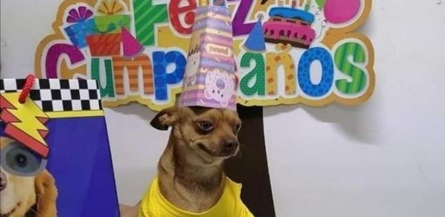 """وللكلاب حظوظ طفي الشمع وأكل تورته..عيد ميلاد """"كلب"""" يثير السخرية علي السوشيال ميديا"""