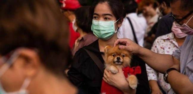 الكلاب وعدوى كورونا