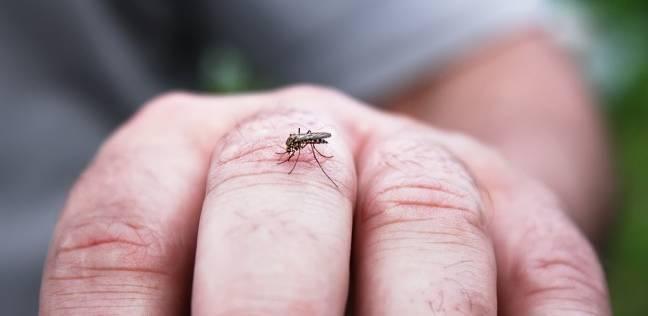 لماذا ينجذب البعوض للدغ أشخاص معينين؟