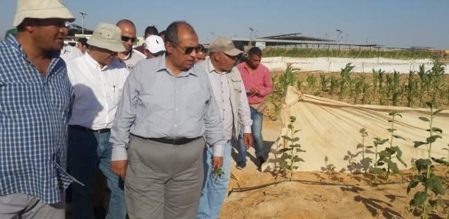 """وزير الزراعة يعلن حجم الطماطم التالفة في مصر .. """"نحتاج إلى خريج مؤهل"""""""