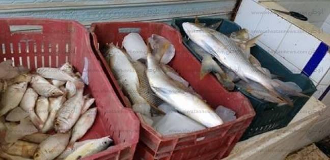 """""""علوم البحار"""" ينظم ورشة عمل عن بيئة ومصايد البحر الأحمر"""