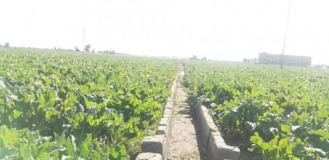 """وكيل """"زراعة الفيوم"""": مشروع جديد لتطوير مياه الري بـ3 ملايين يورو"""