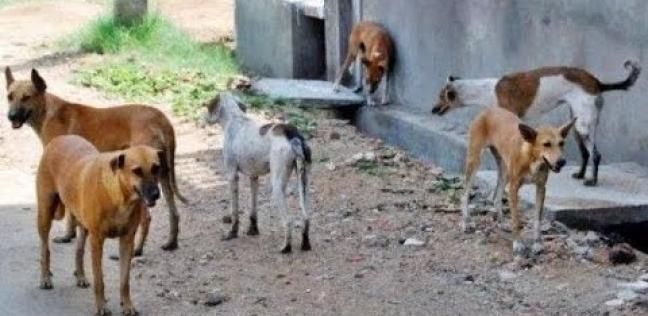 إخلاء سبيل صاحب كلب عقر طفل وتسبب في وفاته في الشرقية