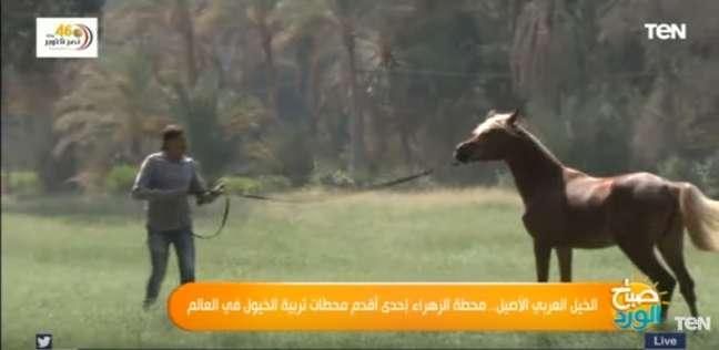 أقدم محطة خيول في الشرق الأوسط
