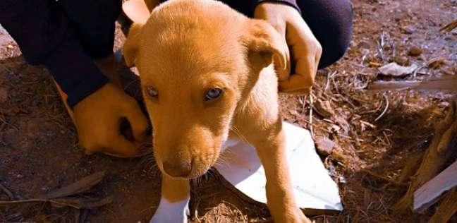 """سيشن تصوير مخصوص .. هدية """"أيمن"""" لكلاب الشوارع: نفسي أفرحهم"""