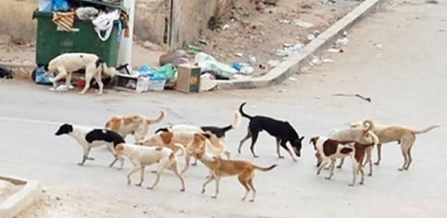"""""""الطب البيطري"""" بأسيوط: حملات مكثفة لمكافحة الكلاب الضالة"""