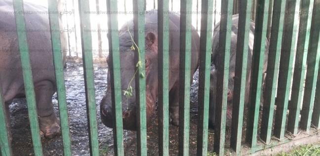 بالصور  أهالي الفيوم يتوافدون على حديقة الحيوان للاحتفال بشم النسيم