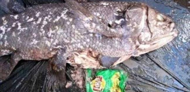 """ضبط 168 طن أسماك مجمدة """"فاسدة"""" في البحيرة"""