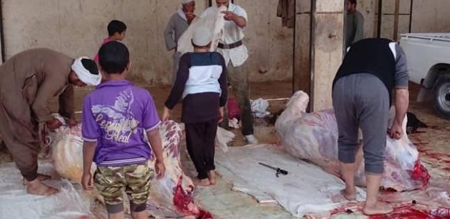 الطب البيطري تنظم حملات رقابية على المجازر بسوهاج