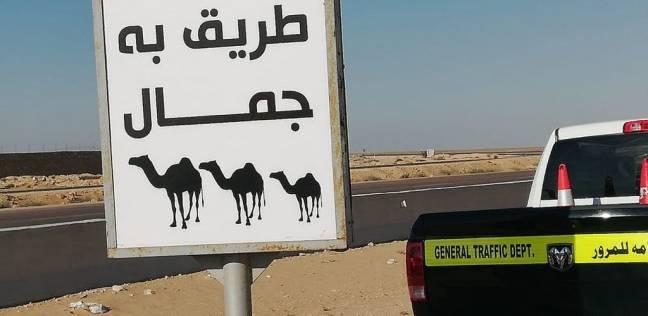 """100 طوق مضئ وعبارات إرشادية """"طريق به جمال"""" للحد من حوادث الطرق"""