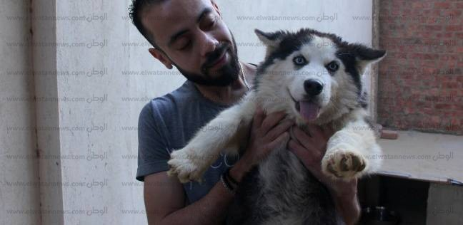 منقذ حيوانات الشارع: «الرحمة مابتفرّقش»