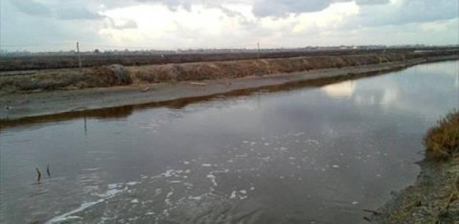 أصحاب «المزارع السمكية»: أسماك البحيرة ملوثة بمخلفات «الصرف الصحى».. ونتعرض للخسارة بسبب «النفوق» ونعمل فى خطر ليلاً ونهاراً