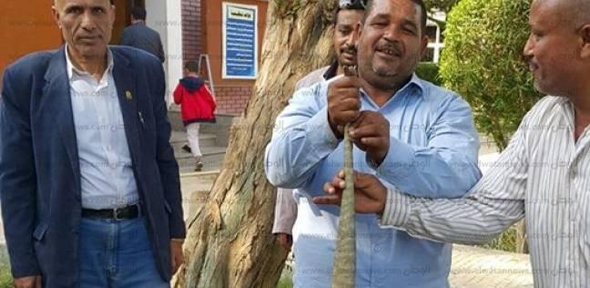 """أفراد أمن جامعة أسيوط يطاردون """"ورل"""" داخل الحرم"""