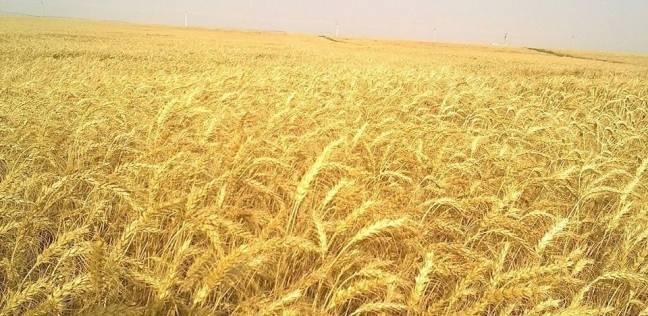 مصر تسعى لإنشاء مزارع مشتركة على أراضى 16 دولة أفريقية لتعظيم الاستثمارات فى القارة السمراء