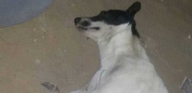 حملة للقضاء على الكلاب الضالة بمساكن غرب النوبارية في الإسكندرية