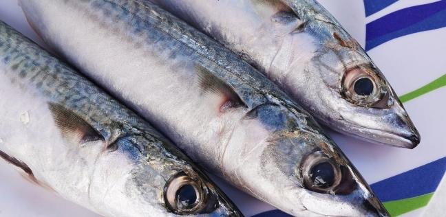 """ركود بأسواق السمك في الغردقة.. والأسماك """"للعرض فقط"""""""