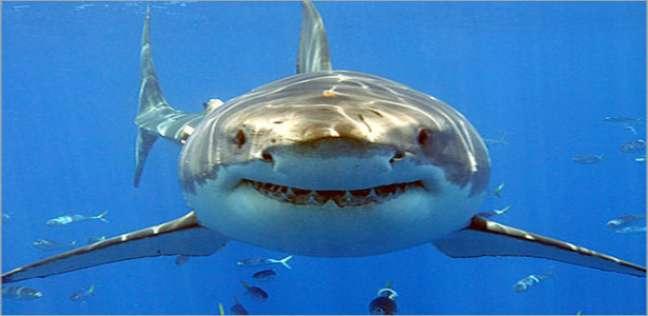 أسماك القرش تهاجم 3 أشخاص في نفس الشاطئ
