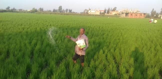 الأرز المقاوم للعطش «قُبلة الحياة» للمزارع والمحصول