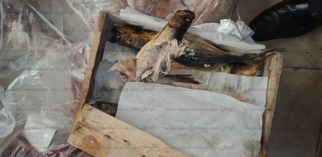 إعدام 2001 طن أسماك غير صالحة للاستخدام الآدمي بمدينة قليوب