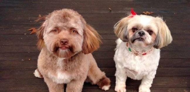 كلب له وجه يشبه أوجه البشر بصورة كبيرة