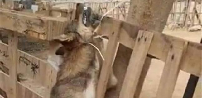 تعذيب كلب