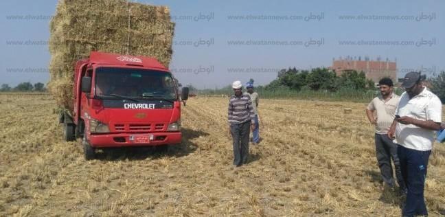 """""""بيئة وسط الدلتا"""": جمع 9 آلاف طن قش أرز وتنظيم 49 ندوة توعية بالغربية"""
