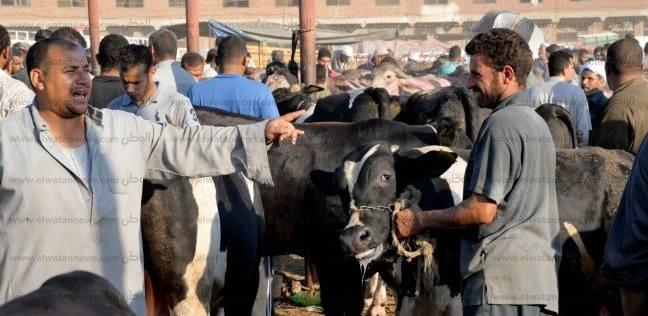 المنوفية تعيد فتح أسواق الماشية مع استمرار أعمال تحصينها