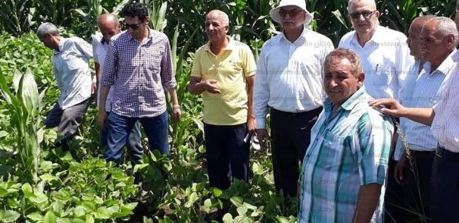 وفد من وزارة الزراعة يتفقد زراعات القطن والذرة ببني سويف