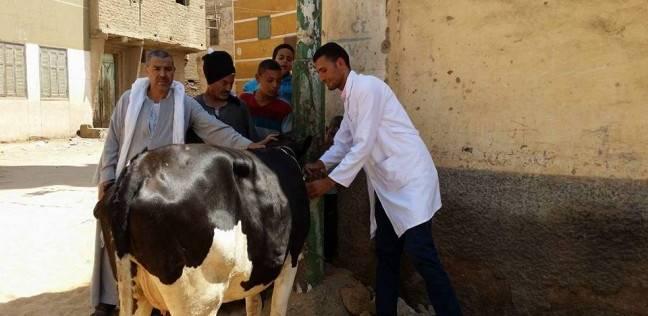 تحصين 95 ألف رأس ماشية ضد مرض الحمى القلاعية بالشرقية