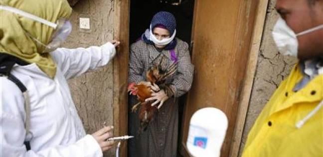 """""""طب بيطري الوادي الجديد"""": المحافظة خالية من """"إنفلونزا الطيور"""""""