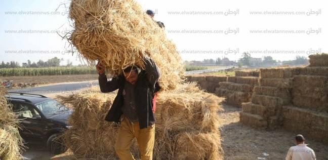 """""""زراعة الغربية"""":توفير الدعم لمواجهة السحابة السوداء والاستفادة من القش"""