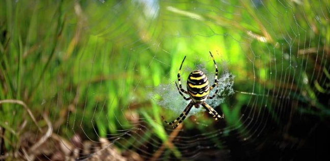 العناكب لا تملك أجنحة وتطير.. وباحث كوري يكشف تقنية طيرانها