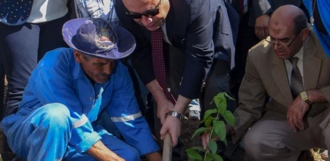 محافظ الإسكندرية يغرس أول شجرة مثمرة تنفيذا لمبادرة الرئاسة