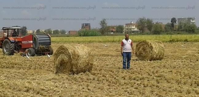 توجيهات لمتابعة عدم حرق قش الأرز ومحاضر للمخالفين في البحيرة