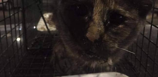 """بحضور المطافي والنجدة..حكاية شاب أنقذ قطة من أعلى كوبري""""الفنجري"""""""