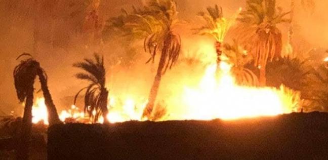 السيطرة على حريق نشب في 100 نخلة بكوم أمبو بأسوان