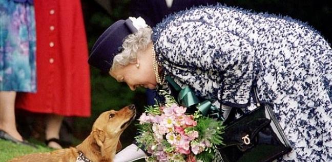 وفاة كلب الملكة إليزابيث الثانية