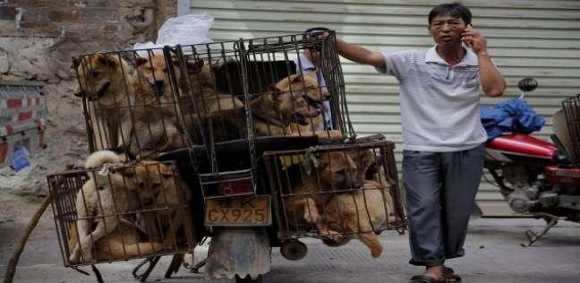 بيع الكلاب والقطط بالصين