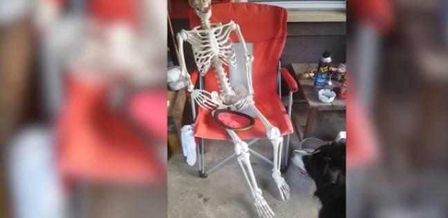 بالفيديو| مقطع طريف لكلب يحاول اللعب مع هيكل عظمي