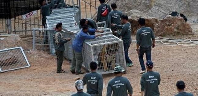 """حديقة حيوانات الجيزة: نسعى لزيادة أعداد الحيوانات خاصة """"المها العربي"""""""