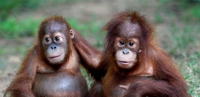 فيروس جدري القرود .. جائحة جديدة في انتظار البشرية: من الحمى حتى العمى