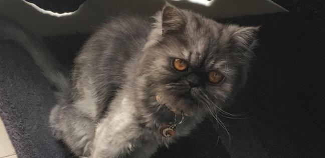 الحكم على رجل قتل قطة بوحشية