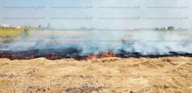 «البيئة» تحذر من مضاعفات آثار حرق «القش» أثناء الخريف