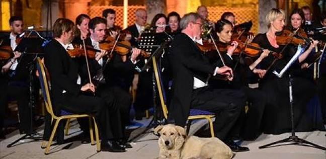 بالفيديو| كلب يستمع لحفل موسيقي في هدوء دون إزعاج