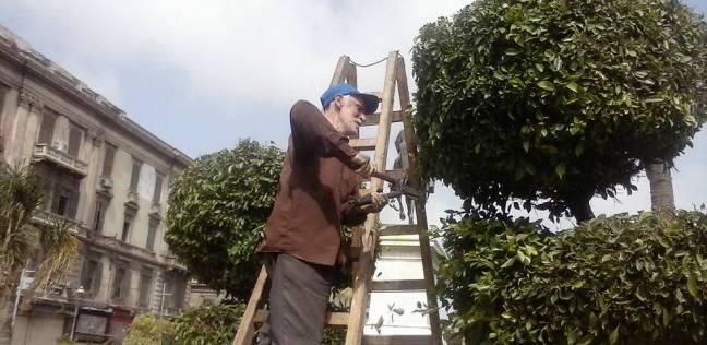 حي الجمرك بالإسكندرية يتابع أعمال تقليم الأشجار