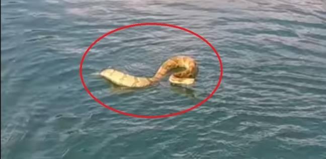 بالفيديو| أفعى تهاجم قاربا على متنه عدة أطفال وتصيبهم بذعر شديد