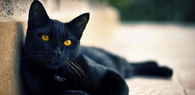 هل يتجسد الجن أو الشياطين في القطط والكلاب والحية؟.. أزهريون يجيبون