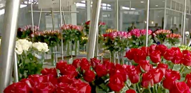 الورد في عيد الحب