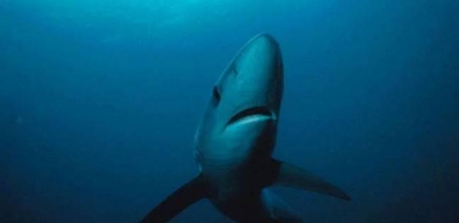 علماء أمريكيون: البشرية انحدرت من سمك القرش