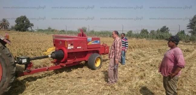 """جهاز شؤون البيئة: جمع نحو ألفي طن """"قش أرز"""" في كفر الشيخ"""
